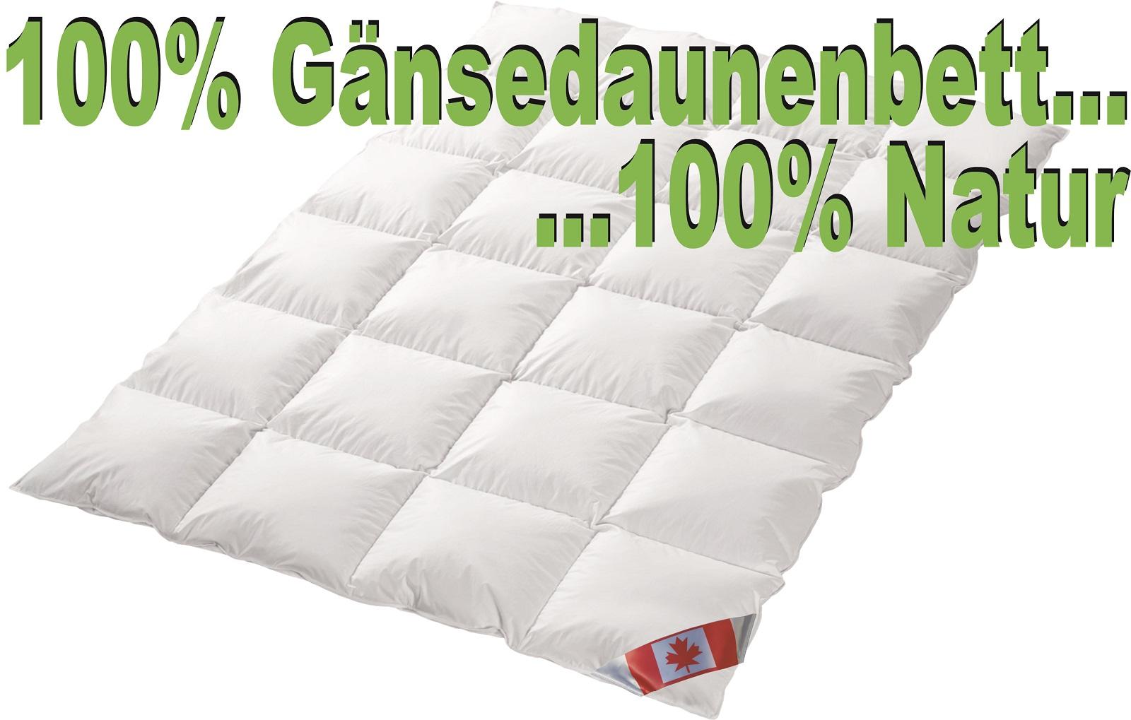 Polaris Premium Ganzjahresdecke Kassettensteg 100% Gänsedaune weiß Wärmegrad 3